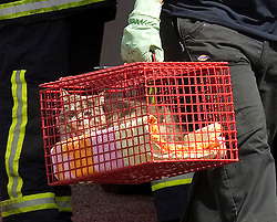 © Licensed to London News Pictures. 27/06/2012. Oldham , UK . A large explosion , believed to be caused by gas , has brought down at least one house in an Oldham terrace. A fireman carries a rescued cat in a cage away from the scene . Photo credit : Joel Goodman/LNP