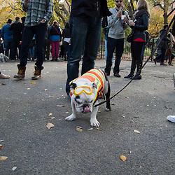 Halloween dog costume parade at Tompkins Square Park. NYC, October 2013.