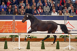 374, King Schufro<br /> KWPN Stallionshow - 's Hertogenbosch 2018<br /> © Hippo Foto - Dirk Caremans<br /> 02/02/2018