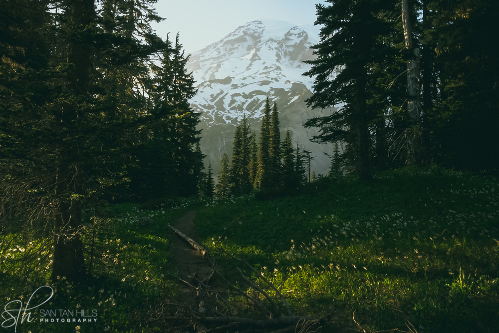 Meadow and trees at Paradise, Mount Rainier National Park, WA