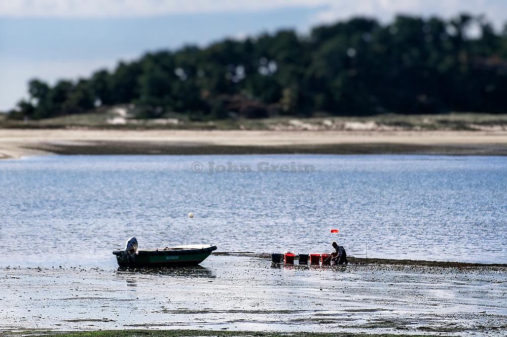 Man clamming in Wellfleet harbor, Wellfleet, Cape Cod, Massachusetts, USA.
