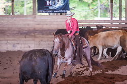 September 23, 2017 - Minshall Farm Cutting 5, held at Minshall Farms, Hillsburgh Ontario. The event was put on by the Ontario Cutting Horse Association. Riding in the $25,000 novice Horse Non-Pro Class is Amanda Law on Sweet and Lo owned by the rider.