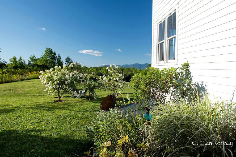 A garden in Upstate New York with views to the Catskill Mountains.  Plants include Miscanthus sinensis Variegatus and Hydrangea. Westerlo, New York, U.S.A.