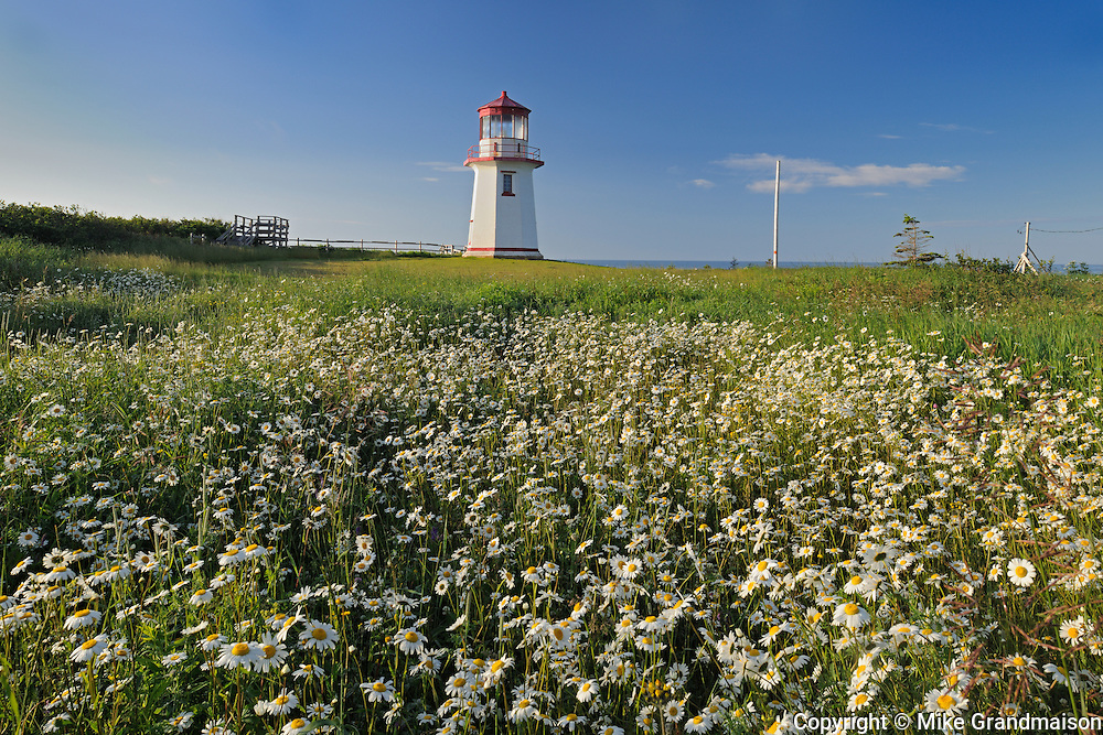 Perce Lighthouse and daisies<br /> Perce<br /> Quebec<br /> Canada