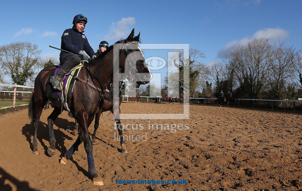 Simon McGonigle on Don Cossack pictured during Gordon Elliot yard visit at Cullentra House Stables, Longwood<br /> Picture by Lorraine O'Sullivan/Focus Images Ltd +353 872341584<br /> 04/03/2015