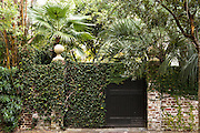 A old wall covered with fig vine and palm trees in the French quarter of historic Charleston, SC.