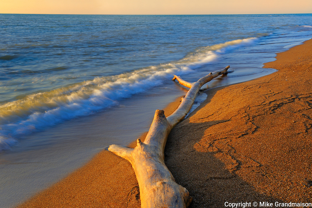 Driftwood along the shore of Lake Erie on Canada's most southerly location<br /> Point Pelee National Park<br /> Ontario<br /> Canada