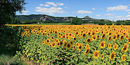 A view of the countryside in the French department of Ardeche, a wonderful area of France rich of great opportunities for landscape photography. In summer the fields are all carpeted  with sunflowers and lavender. .