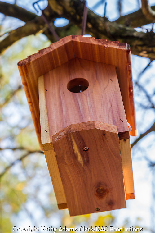 Store bought carolina chickadee nest box, bird house, suspended from a branch, The Woodlands, Texas.