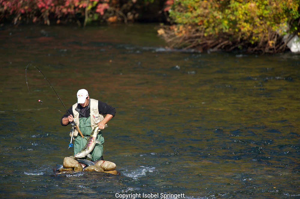 Fishing in the Puntledge River.  ,Putledge River,Courtenay,British Columbia,Canada, (Photographer: Isobel Springett),Fly Fishing  ,Putledge River,Courtenay,British Columbia,Canada, (Photographer: Isobel Springett),