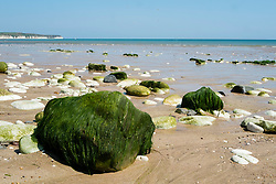 Bridlington North Beach green seaweed covered rocks and pebbels<br />