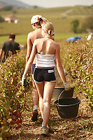 Polish wine grape harvesters Le Domaine du Vissoux, in Beaujolais..Owner is Pierre-Marie Chermette