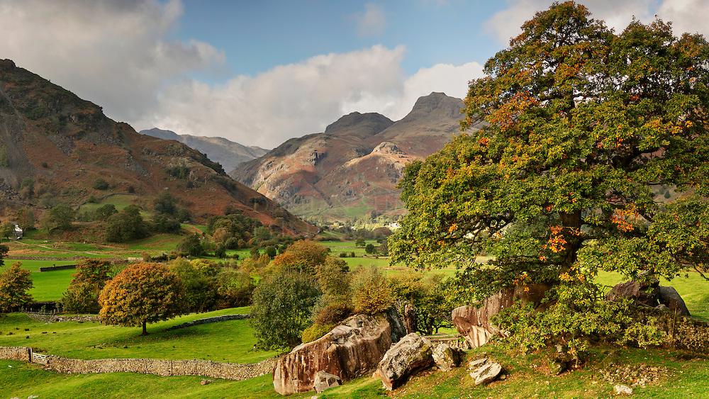 Tuning Leaves, Great Langdale, Lake District, Cumbria