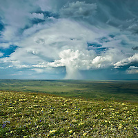 thunder head, anvil cloud, drops rain in mushroom cloud,