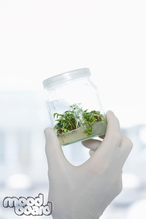 Lab Worker holding jar of plant material up to the light