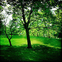 Green grass and trees in summer park