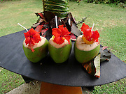 Coconut drinks, Yasawa Island Resort and Spa, Yasawa Islands, Fiji