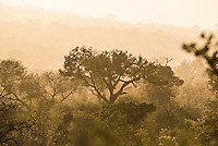 Winters Dawn in the bushveld, Kruger National Park, Limpopo, South Africa