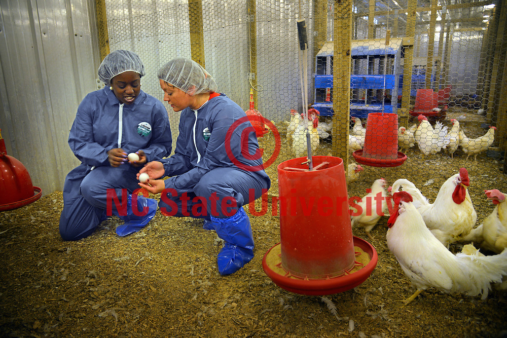 Prestage Dept. of Poultry Science students examine eggs.
