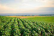 Idaho, Gooding. A beautiful green field of soybeans on a summer morning.