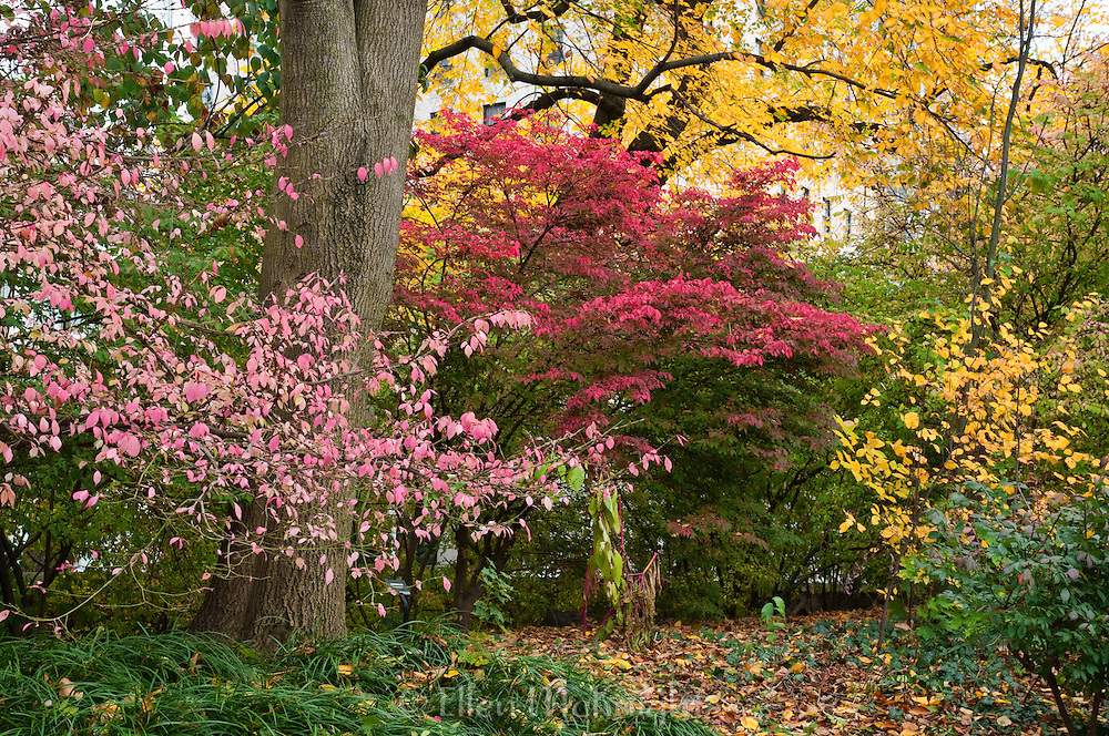 Autumn Color in Central Park, New York City