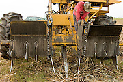 14 NOVEMBER 2005 - FRANKLIN, LA: LEROY HATCHERSON, a worker on Jesse Breaux' sugar cane farm, repairs a cane loader working the cane harvest during the 2005 sugar cane harvest. Louisiana is one of the leading sugar cane producing states in the US and the economy in southern Louisiana, especially St. Mary and Iberia Parishes, is built around the cultivation of sugar. Statewide, more than 460,000 acres of land is cultivated with sugar cane and more than 27,000 people work in the sugar industry in Louisiana. Sugar growers in the area are concerned that trade officials will eliminate sugar price supports during upcoming trade talks for the proposed Free Trade Area of the Americas (FTAA). They say elimination of price supports will devastate sugar growers in the US and the local economies of sugar growing areas. They also say it will ultimately lead to higher sugar prices for US consumers.    PHOTO BY JACK KURTZ