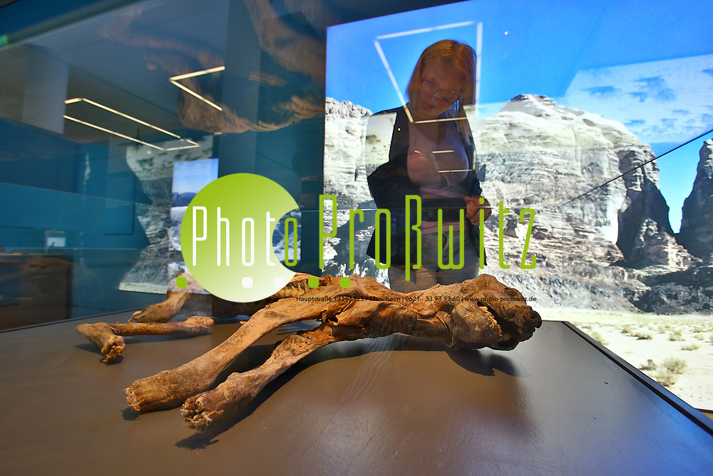 Mannheim. 13.09.18 | <br /> Ab 16. September 2018 zeigen die Mannheimer Reiss-Engelhorn-Museen (rem) die Sonderausstellung &quot;MUMIEN &ndash; Geheimnisse des Lebens&quot;. Die Besucher erwarten mehr als 50 faszinierende Mumienfunde aus aller Welt &ndash; von den Dinosauriern &uuml;ber alte Hochkulturen bis in die Gegenwart. Gut zehn Jahre nach der ersten gro&szlig;en Mumien-Schau in Mannheim erz&auml;hlen die Reiss-Engelhorn-Museen anhand neuer Forschungsergebnisse ihre Geschichte. Inszenierte Laborbereiche bieten dar&uuml;ber hinaus interessante Einblicke in die Methodenwelt moderner Mumienforschung.<br /> - Eva Hartmann schaut sich die Ausstellung an.<br /> - Naturmumie einer Hy&auml;ne<br /> Bild: Markus Prosswitz 13SEP18 / masterpress (Bild ist honorarpflichtig - No Model Release!) <br /> BILD- ID 00109 |