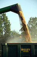 Combine harvester emptying harvested barley into grain traile