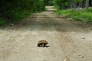 Turtle on dirt road with footprints.