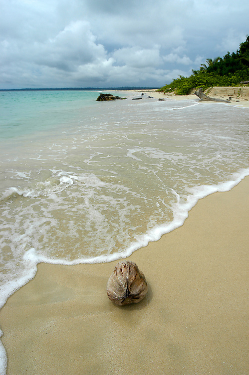 Lone Coconut on the beach before a storm in a small island in Bocas Del Toro Panama