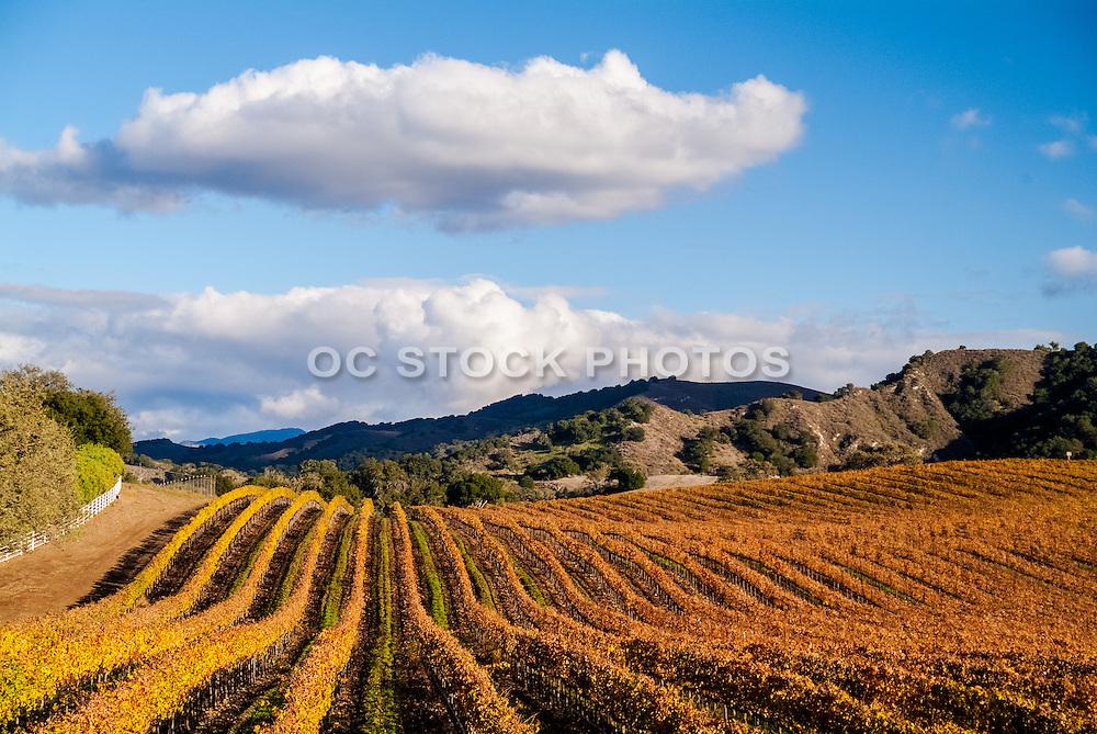 Wine Country in Santa Ynez Valley California