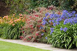 Hemerocallis 'Pink Damask', Fuchsia magellanica 'Variegata' and Agapanthus Hardy Hybrid in a border at Sissinghurst Castle Garden