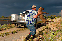 Rice farmer, Sean Doherty of Dunnigan CA, lifts his puppy Duke into the back of his truck, Monday, May 5, 2014.<br />