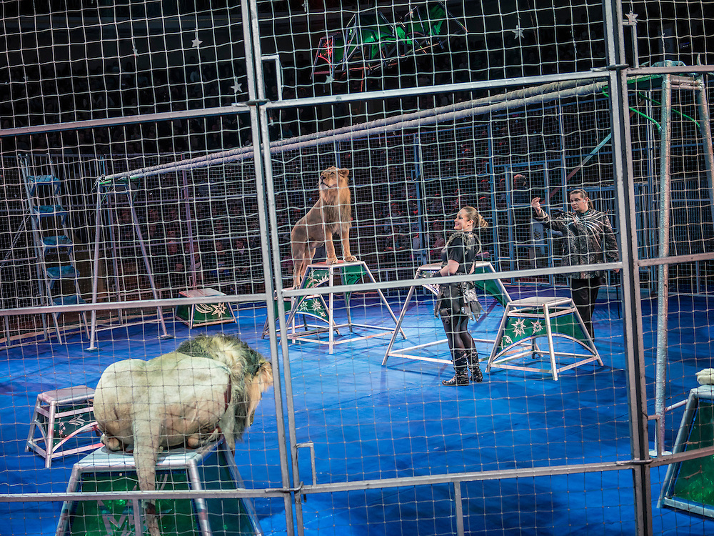 "Lion tamers peform at the Belarus State Circus during a show called ""Africa!?!"" on Wednesday, November 25, 2015 in Minsk, Belarus."