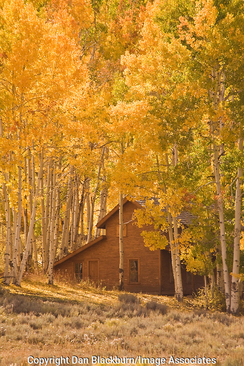 Wooden house framed by colorful autumn aspens on the Dallas Divide in the San Juan Mountains Colorado.