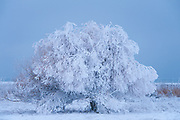 Hoar frost at the U.S. Fish & Wildlife Waterfowl Production Area on Flathead Lake