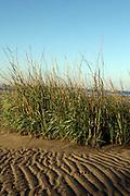 Low-tide at Floyd Bennett Field