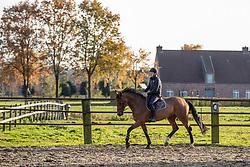 Geerts Jeroen, Van Hasselt Marc, BEL, Japrilli VH<br /> Stal Van Hasselt - Wuustwezel 2019<br /> © Hippo Foto - Dirk Caremans<br /> 22/11/2019