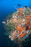 Diver and Deep Reef Wall with Soft Corals<br /> <br /> Shot in Indonesia