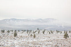 """Snowy Martis Valley 2"" - Photograph of a foggy and snow covered Martis Valley in Truckee, California."