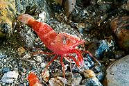 Shrimps & Prawns