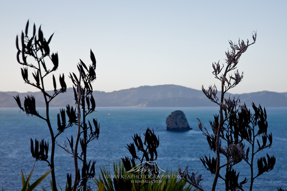 Flax at Coromandel, New Zealand