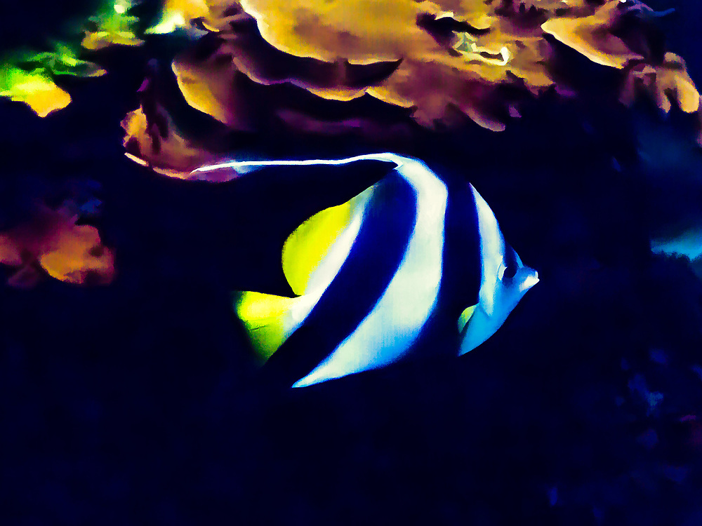 FISH-TOPAZ-SIMPLIFY4-IMPRESSION