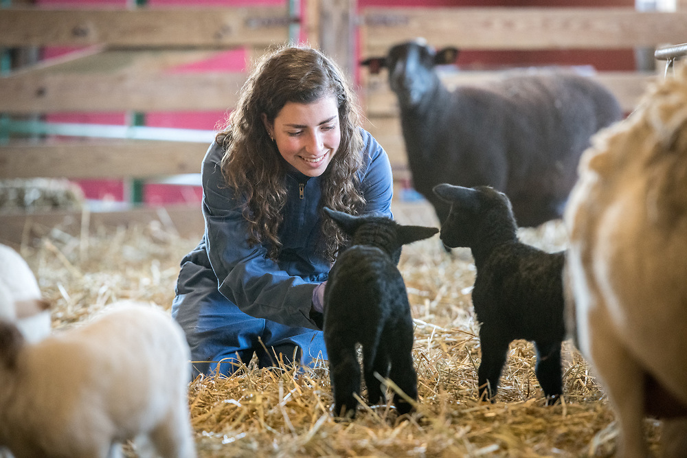 Young adult female in coveralls pets lamb with care, College Park, Maryland