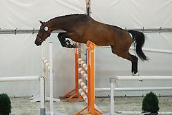 081, Hosanne ES<br /> Vrijspringen Nationale Merriekeuring, 3 jarige springmerries <br /> KWPN Paardendagen Ermelo 2015<br /> © Hippo Foto - Dirk Caremans