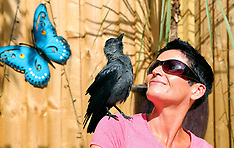 Woman adopts jackdaw who thinks he is human and eats from her own mouth - 18 Oct 2019