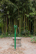 Green direction sign post and a background of bamboo in the Jardin de Plantes, Montpellier, south of France.