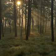 Sunrise at the pine-oak forests of the Transvolcanic belt of Mexico, a critically endangered ecosystem