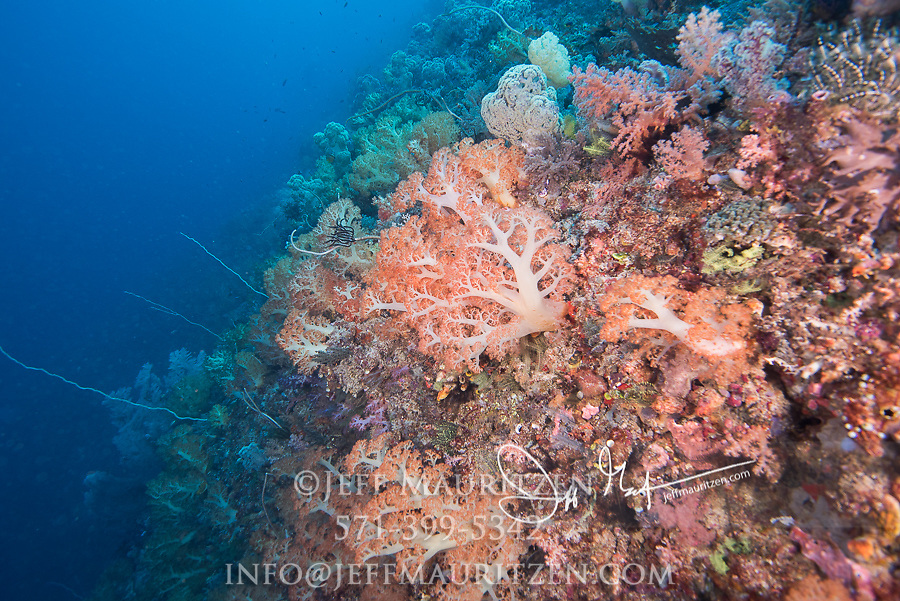 Soft corals in Raja Ampat, Indonesia.