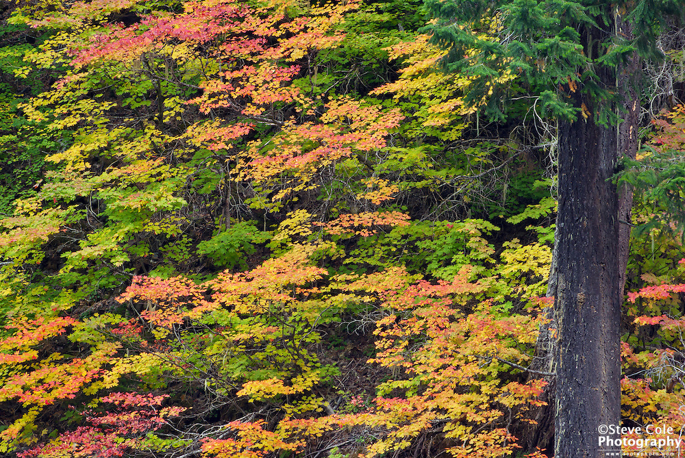 Fall Color #1 - Mount Baker-Snoqualmie National Forest